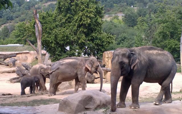 Jak velký je pták slona